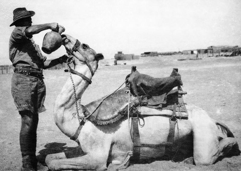 Anzac Camel Corps