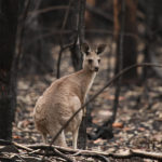 Classroom Activity: Bushfires and the Impact on Wildlife