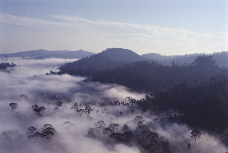 Virgin Dipterocarp Rainforest Malaysia